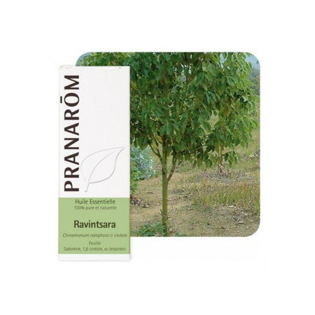 Picture of PRANAROM RAVENSARA 10 ML