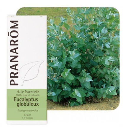 Picture of PRANAROM EUKALIPTUS GLOBULUS 10 ML