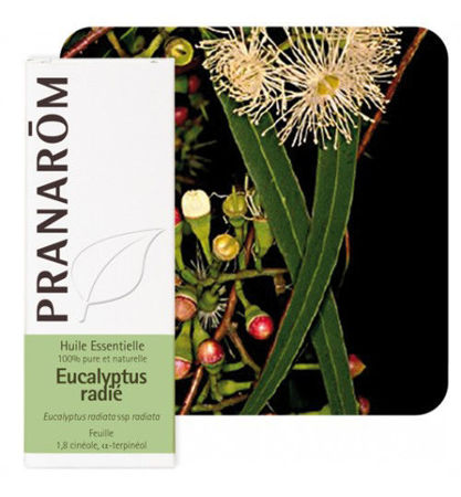 Picture of PRANAROM EUKALIPTUS RADIATA 10ML